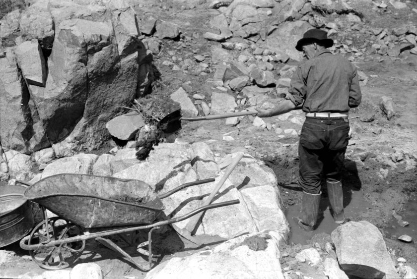 Gold prospector shoveling dirt and rocks into wheel barrow_01